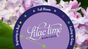 bloom-o-meter-web